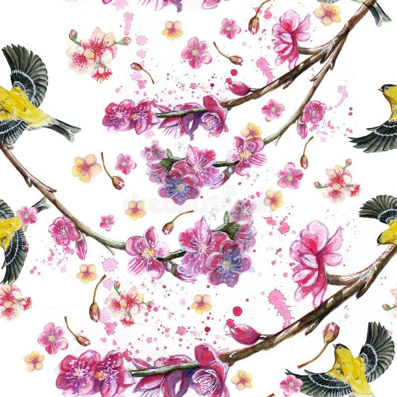 Акварель рисуя безшовную картину на теме весны, жары, иллюстрации птицы похожего на воробь флота летания Oriolе иллюстрация штока
