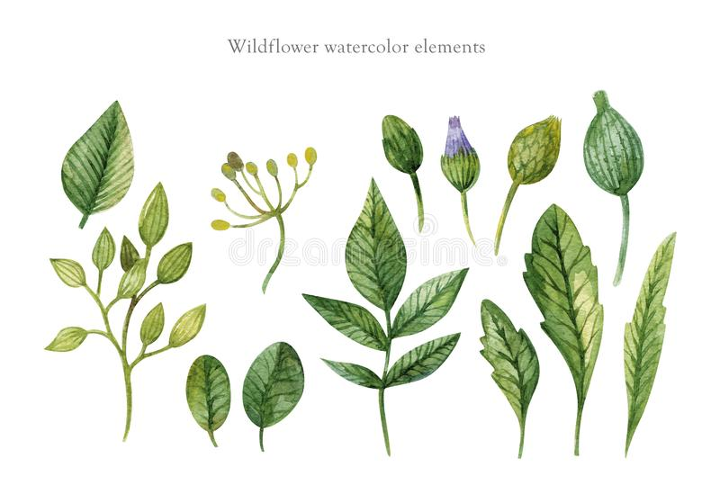 Акварель руки вычерченная установила зеленых листьев, трав и ветвей изолированных на белой предпосылке Используйте для создания стоковое изображение rf