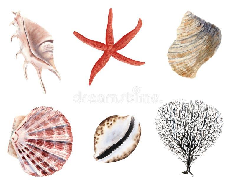 акварель руки вычерченная установила изолированных раковин и clams иллюстрация вектора