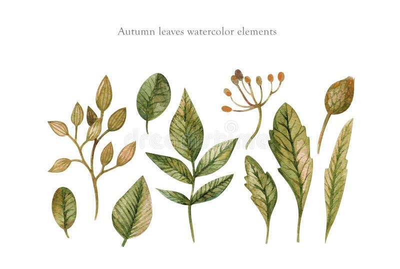 Акварель руки вычерченная установила листьев, трав и ветвей осени изолированных на белой предпосылке Используйте для создания стоковое изображение