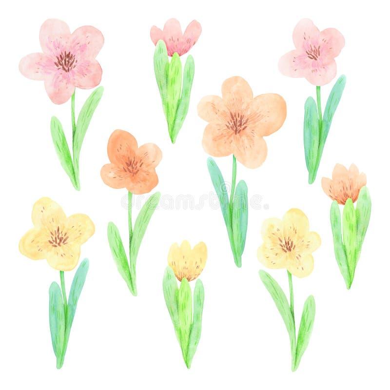 Акварель установила милых пастельных цветков весны иллюстрация вектора
