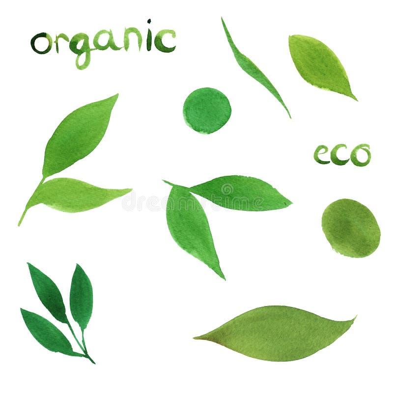 акварель установила простых зеленых лист изолированных на белой предпосылке eco, органическая концепция, помечая буквами иллюстрация вектора