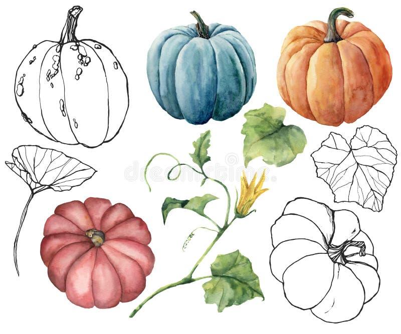 Акварель установила с линейными тыквами и листьями Рука покрасила тыквы красным, голубым, апельсину и нашивке изолированные на бе стоковые изображения rf