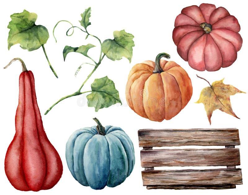 Акварель установленная с тыквами, деревянная коробка Рука покрасила красные, голубые и оранжевые тыквы при листья и ветви изолиро иллюстрация штока
