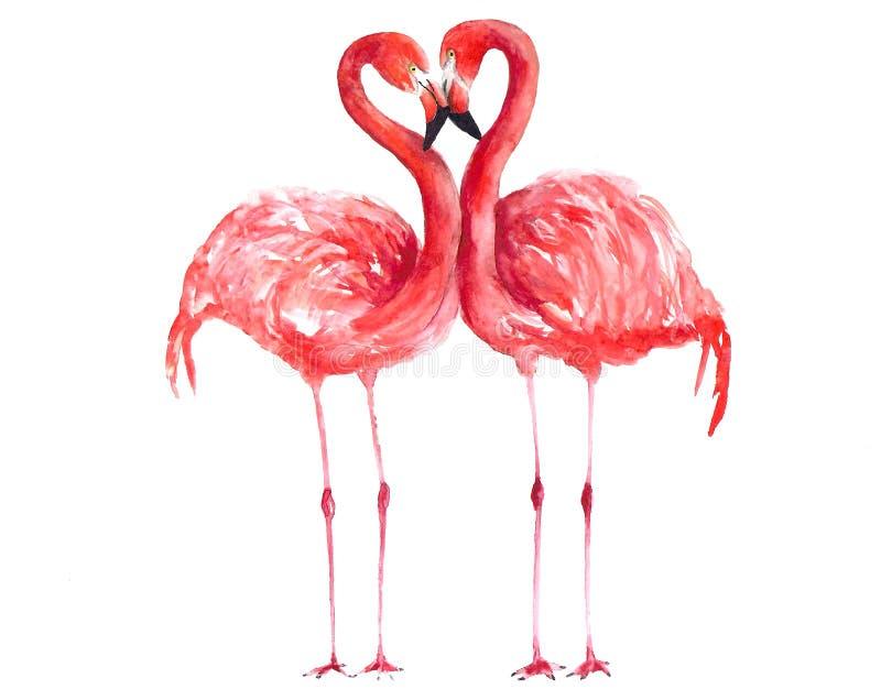 Акварель фламинго иллюстрация вектора