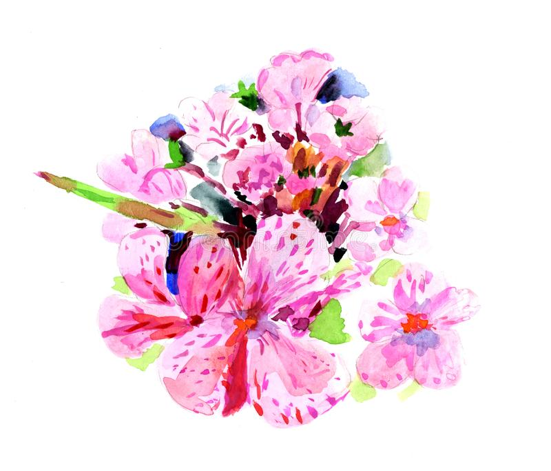 Акварель цветка гераниума : стоковые фотографии rf