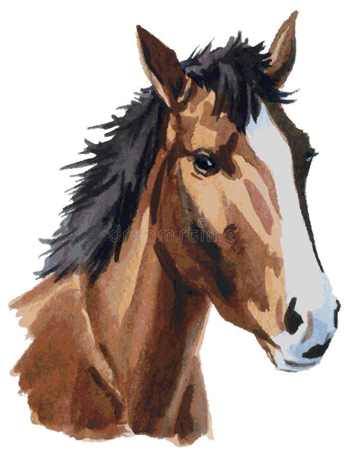 Акварель головы лошади иллюстрация штока
