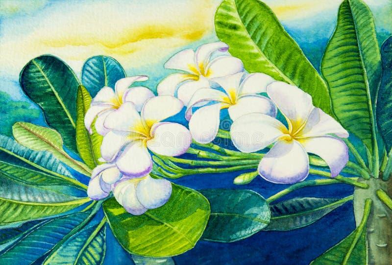 Акварель крася первоначально на бумажное красочном белого plumeria цветет иллюстрация вектора