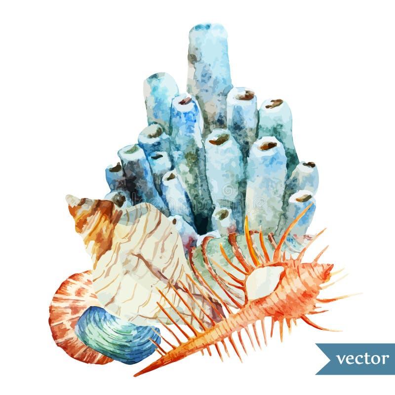 Акварель, море, коралл, shell2 бесплатная иллюстрация