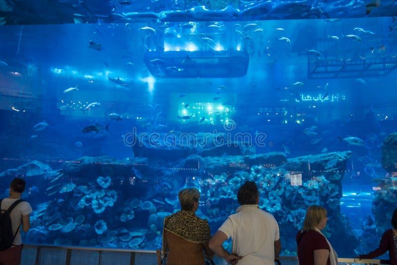 Аквариум в моле Дубай стоковое изображение