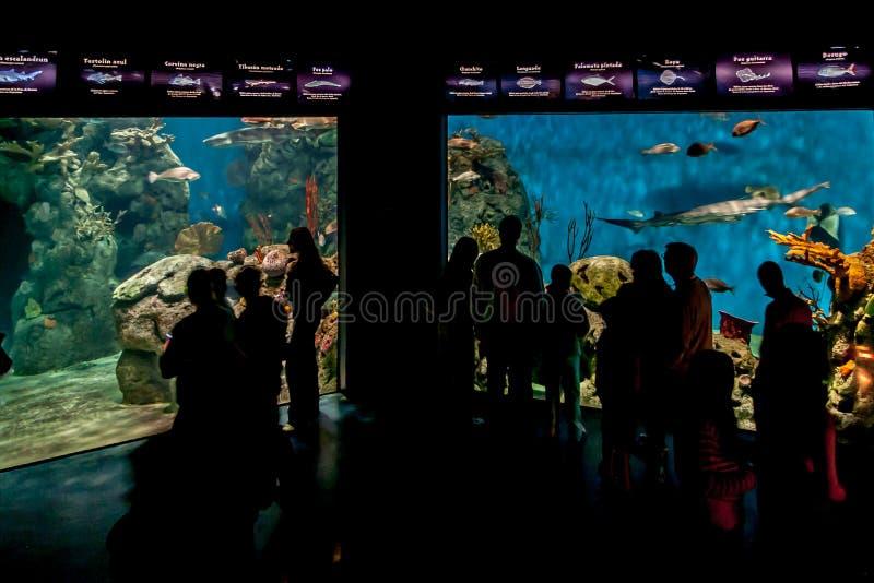 Аквариум в Temaiken стоковые фотографии rf