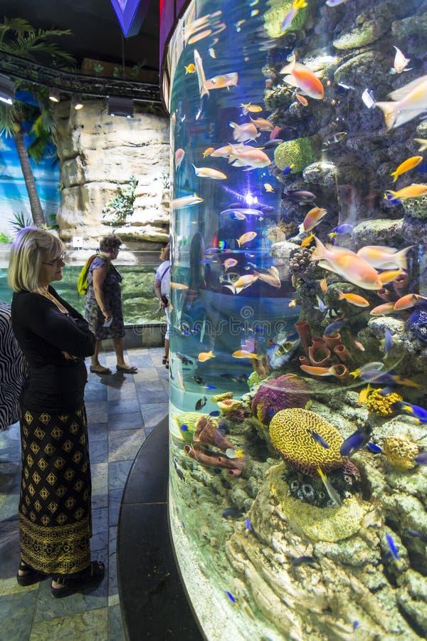 Аквариум Дубай женщины наблюдая стоковая фотография