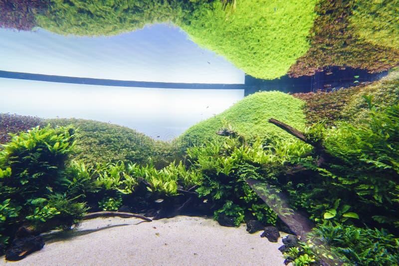 аквариум декоративный стоковые фотографии rf