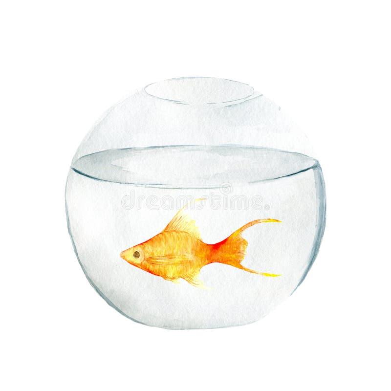 Аквариум, реалистический аквариум с рыбами и водоросли Иллюстрация акварели аквариума с рыбами изолированными на белизне иллюстрация штока