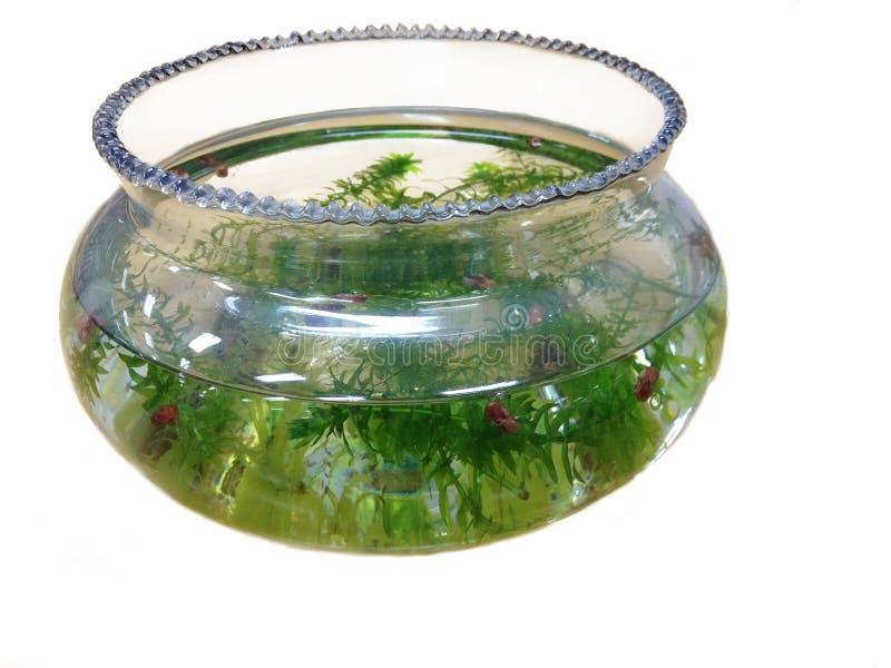 Download аквариум садка для рыбы стоковое фото. изображение насчитывающей трава - 40579598