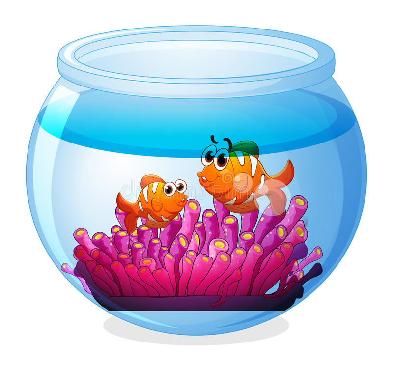 Аквариум с 2 оранжевыми рыбами иллюстрация штока