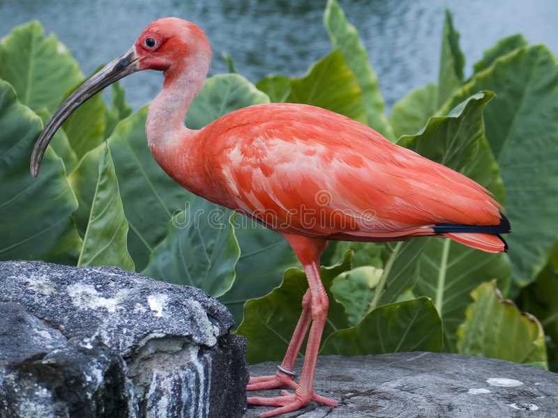 акватическая птица стоковое изображение