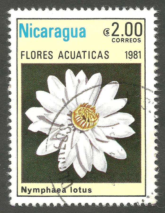 Акватические цветки, лотос Nymphaea стоковое фото rf