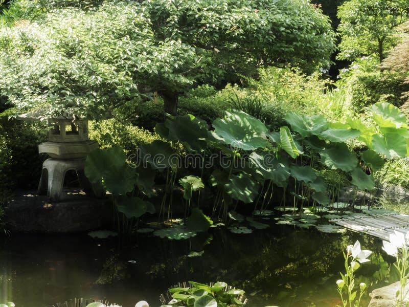 Акватический сад с засаженный стоковое изображение