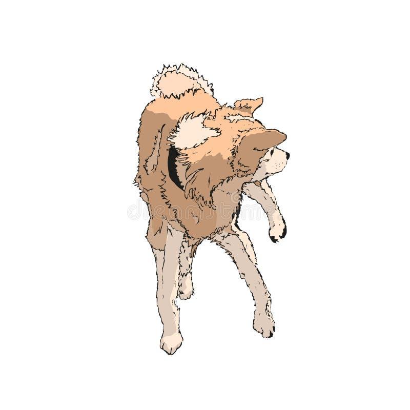 Акита-inu иллюстрация вектора