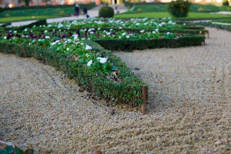Аккуратно уравновешенный кустарник в саде песка стоковые фото