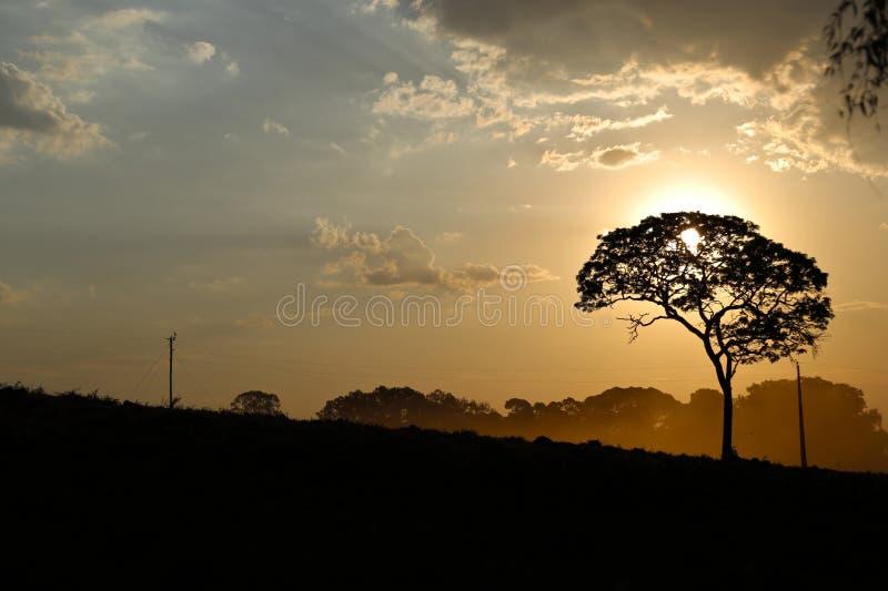 акриловые цветы имеют заход солнца изображения ландшафта себя I покрашенный стоковое изображение rf