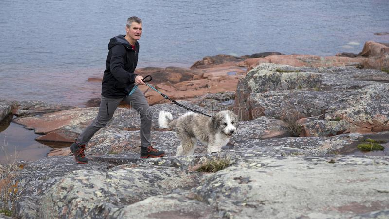 Активный ходок собаки на скалистом береге стоковое фото rf