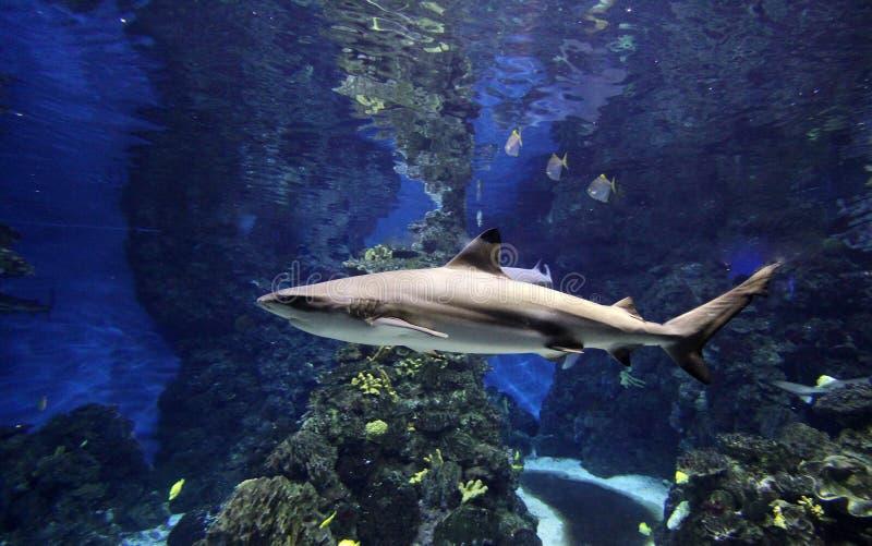акула аквариума стоковое изображение