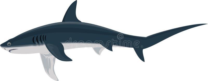 Акула акулы молотильщика вектора, длинн-замкнутой или общей молотильщика бесплатная иллюстрация