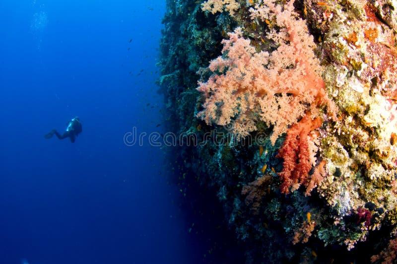 акула скуба рифа водолаза стоковое фото rf