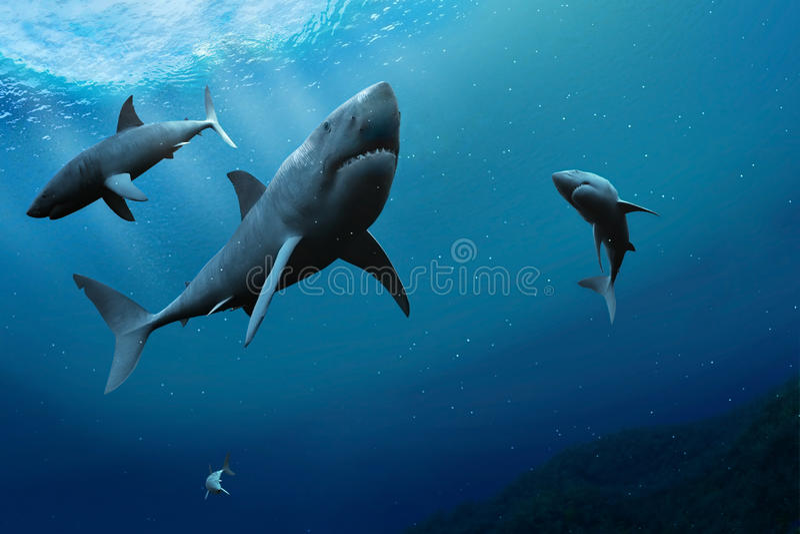 Акулы в море. бесплатная иллюстрация