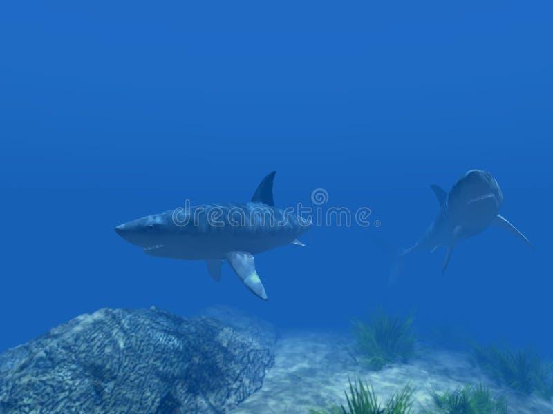 акулы 2 под водой стоковое фото rf