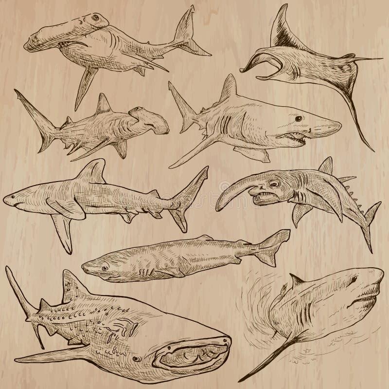 Акулы - пакет нарисованный рукой иллюстрация вектора
