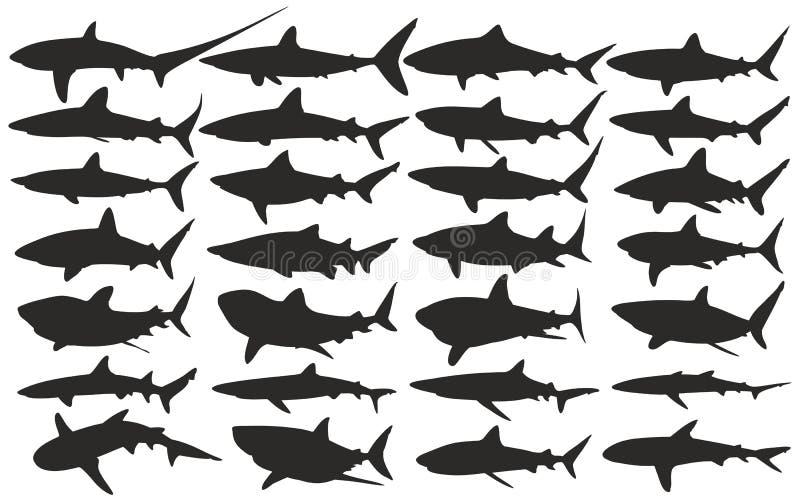акулы иллюстрация штока