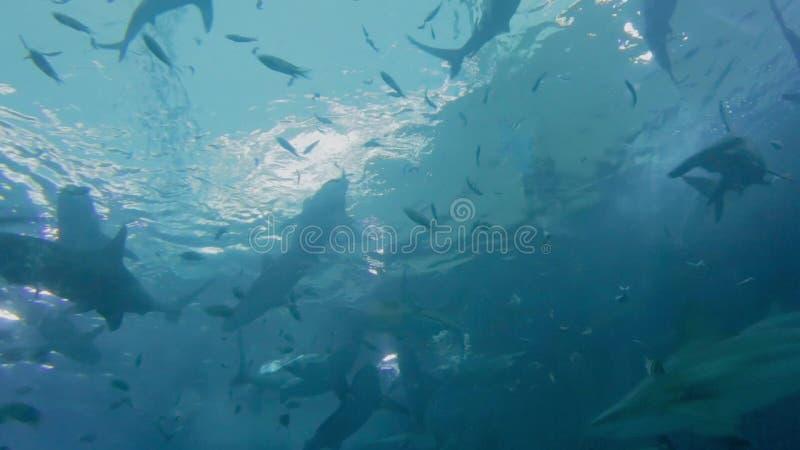 акулы видеоматериал