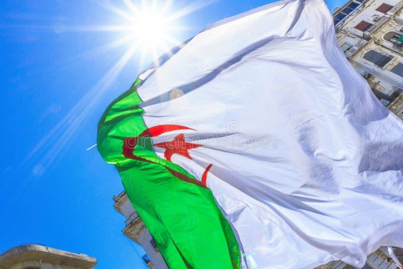 Алжирский флаг стоковые фотографии rf