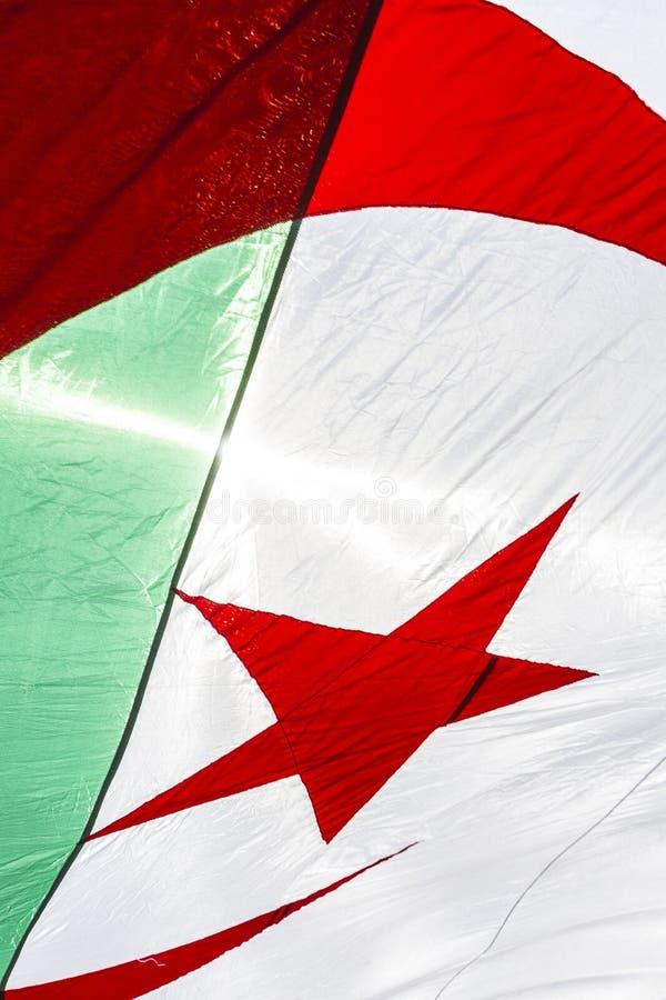 Алжирский флаг стоковые изображения