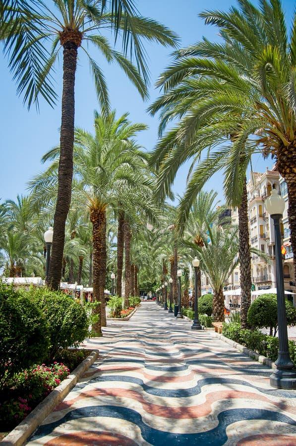АЛИКАНТЕ - 12-ОЕ ИЮЛЯ 2015: Переулок ладони на Аликанте ИСПАНИИ в горячем su стоковое изображение