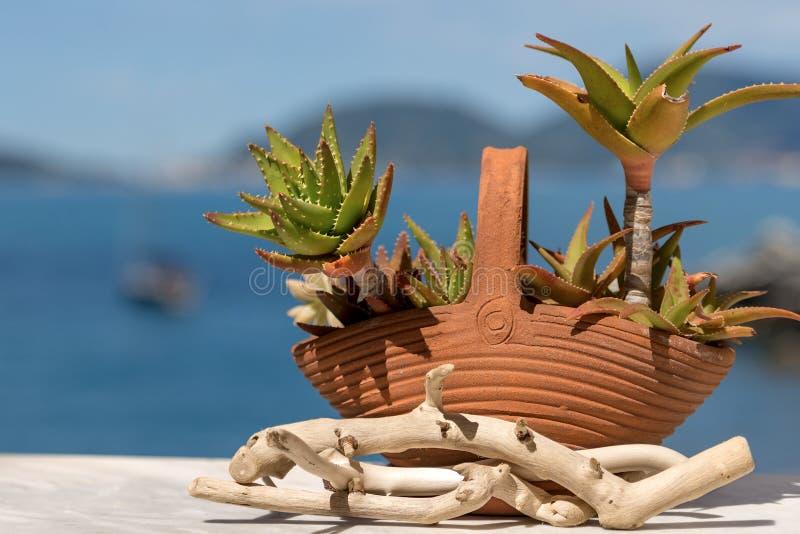 Алоэ Вера в глиняном горшке - Лигурии стоковая фотография