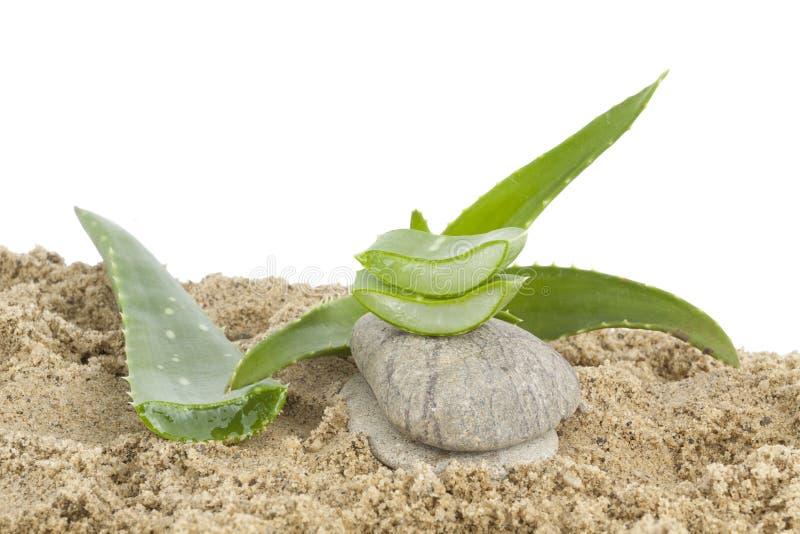 Алоэ vera и камень на песках стоковое фото rf