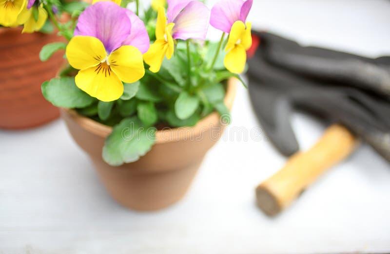 Альты в цветочном горшке стоковое фото