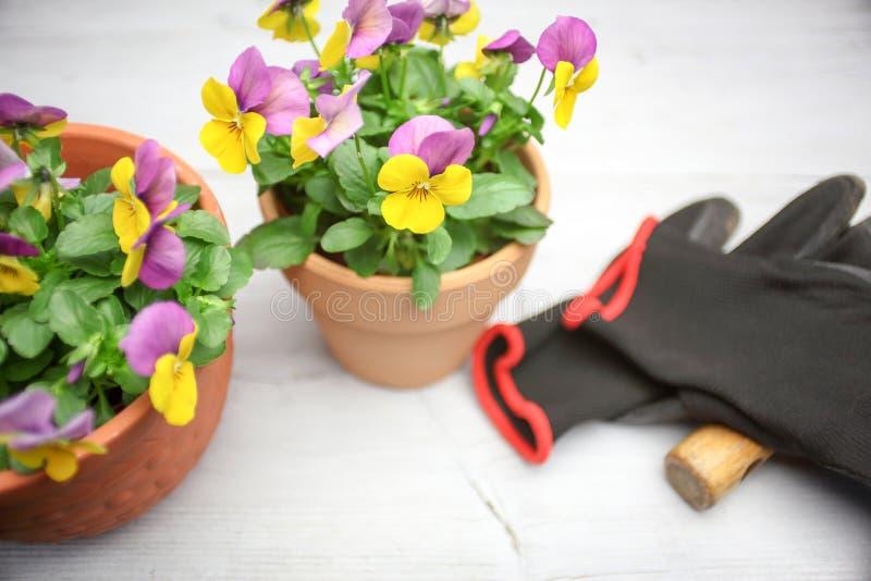 Альты в цветочном горшке стоковая фотография