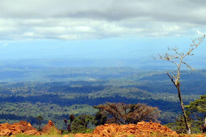 Амазония стоковое изображение rf