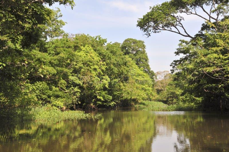 Амазонка затопила пущу стоковая фотография rf