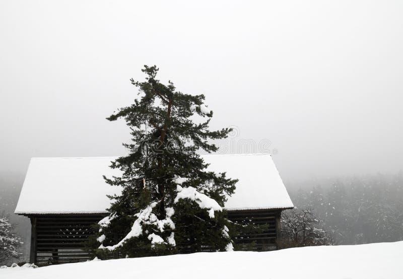 амбар покрыл сиротливый снежок стоковое изображение rf