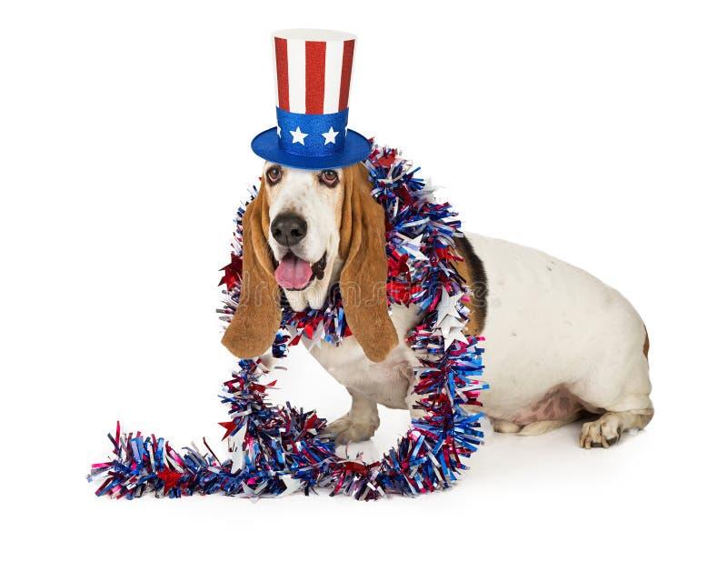 Американская патриотическая гончая собака выхода пластов стоковые фото
