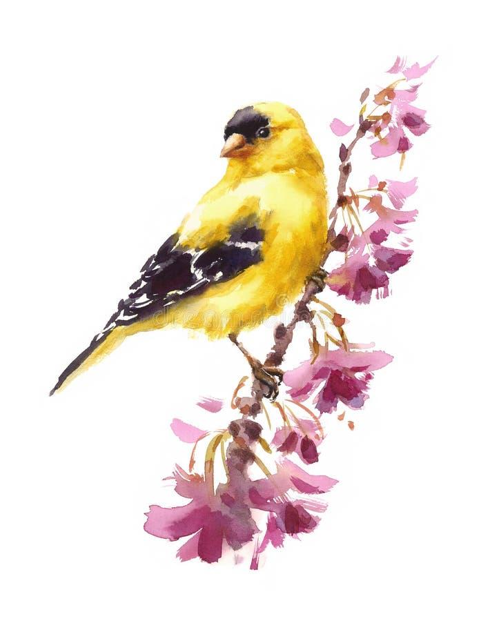 Американская птица Goldfinch на ветви при покрашенная рука иллюстрации падения акварели цветков