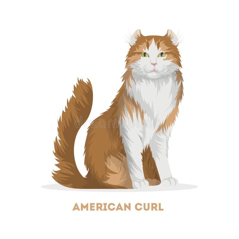 американская скручиваемость кота иллюстрация штока