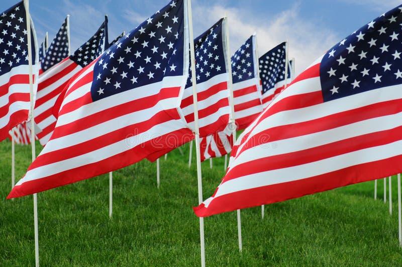 Американские флаги в поле стоковая фотография