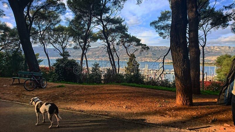 Американское stafford в парке с взглядом на море стоковая фотография rf